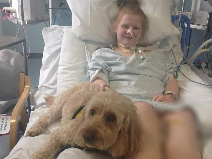 Ami is in a hospital bed, connected by various tubes and machines. A support dog has come to cheer her up, a Labradoodle named Merlin