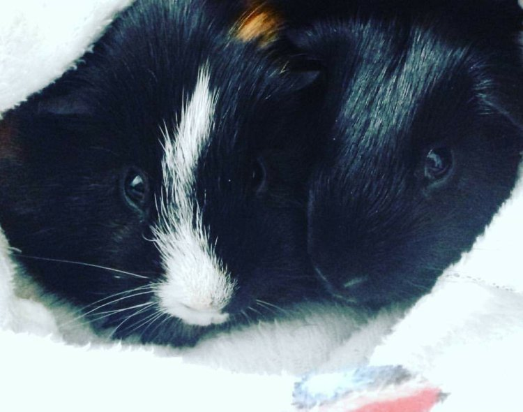 Loki and Thor are snuggled up together after just having a bath