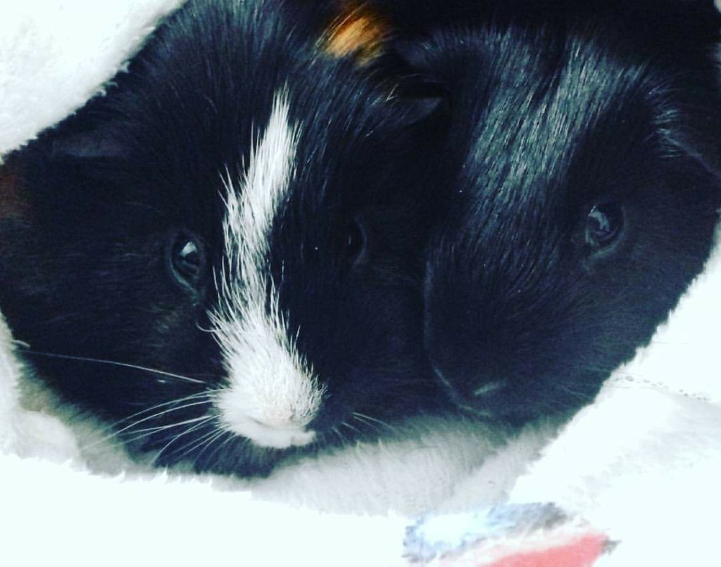 Loki and Thor snuggled up together after a bath
